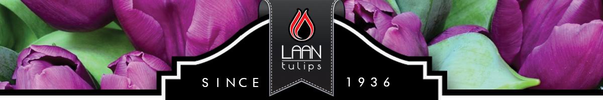 Laan Tulips